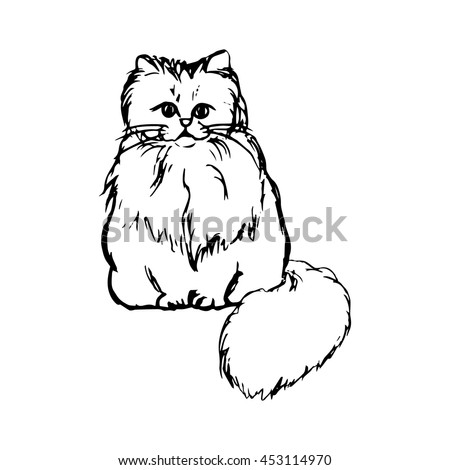 Graphic image of a cat with fluffy hair, vector illustration on white background