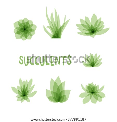 Graphic Set of succulents isolated on white background for design of cards, invitations. Vector illustration