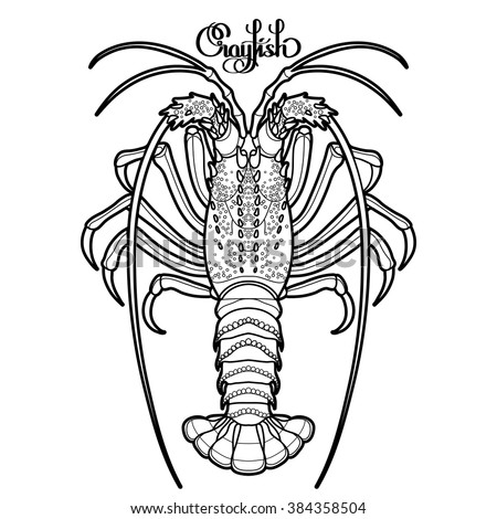 Spiny Lobster Stock Images Royalty Free Images Amp Vectors