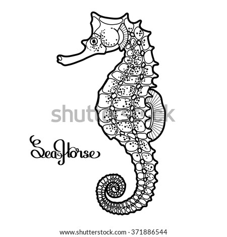 Graphic vector Seahorse drawn in a line art style. Ocean creature isolated on white background. Coloring book page design for adults and kids - stock vector