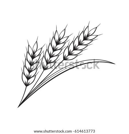 Wheat Drawing Stockbilder Und Bilder Vektorgrafiken Ohne