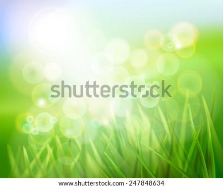 Grass in sunlight. Vector illustration. - stock vector