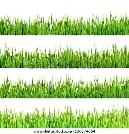 Grass isolated on white. And also includes EPS 10 vector