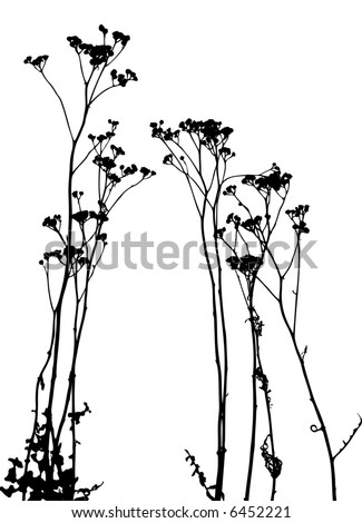 grass, plant vector - stock vector