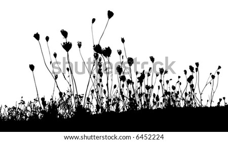 grass, plant vector