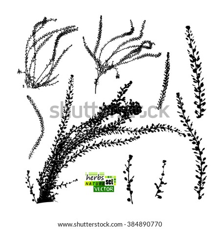 grass set of objects. Vector - stock vector