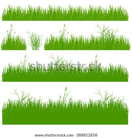 grass, shrubs. A set of various types of grass. Set of grass on a white background. Set of grass vector illustration. Green grass and bushes. - stock vector