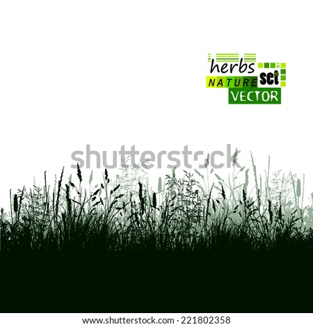 Grass silhouette background. Vector  - stock vector
