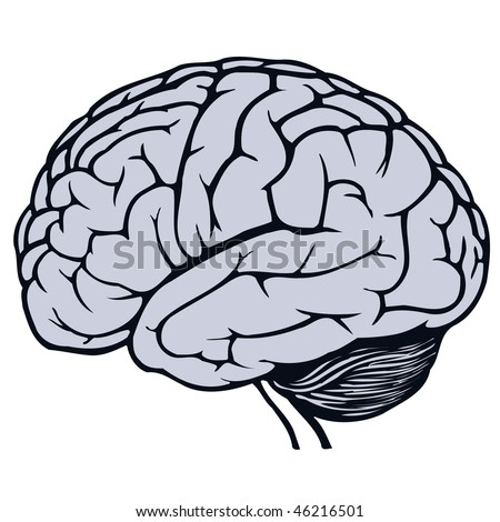 gray human brain - stock vector