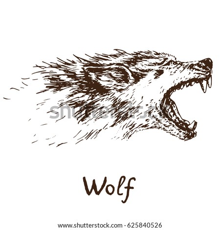 Gray Wolf Howling Drawing Gray Wolf Timbe...