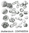 Great collection of highly detailed hand drawn nuts. - stock vector