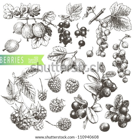 Great hand drawn illustrations of berries isolated on white background. - stock vector