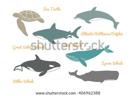 Great White Shark, Sea Turtle, Atlantic Bottlenose Dolphin and Whales. Vector illustration. Isolated on a White background. - stock vector