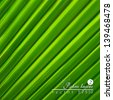 Green background. Palm leaves.  - stock vector