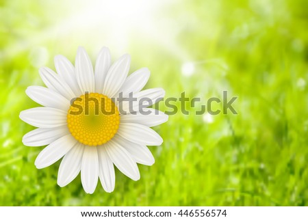 Green Background with chamomile flower, summer vector illustration.