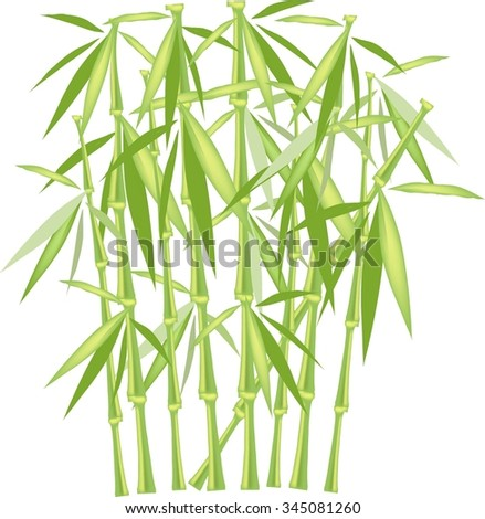 Green bamboo on a white background, isolated object. Green and yellow stems and leaves. Design element - stock vector