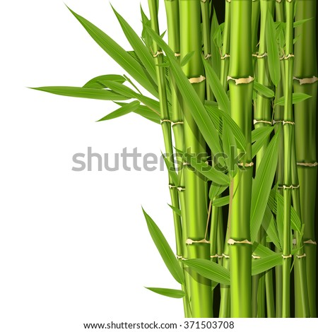 Green bamboo stems with leaves - grove background - stock vector