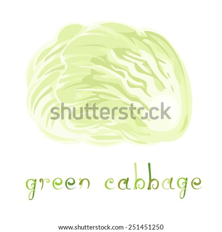 Green Cabbage. Illustration of fresh early vegetable. Cartoon cabbage with title. Isolated element on white background. Vector file is EPS8. - stock vector