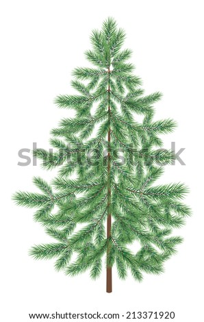 Green Christmas spruce fir tree isolated on white background. Vector - stock vector