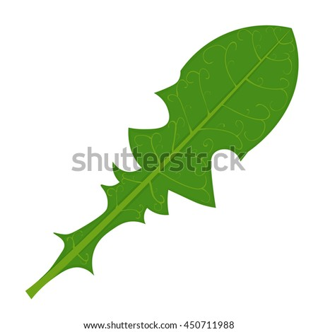 Green Dandelion leaf vector illustration isolated on a white background - stock vector