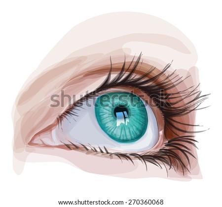 Green Eye. Vector illustration / Eps10 - stock vector