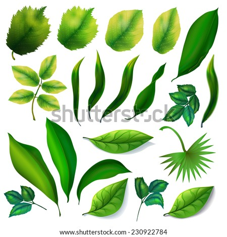 Green foliage of trees and flowers collection. 21 elements. - stock vector