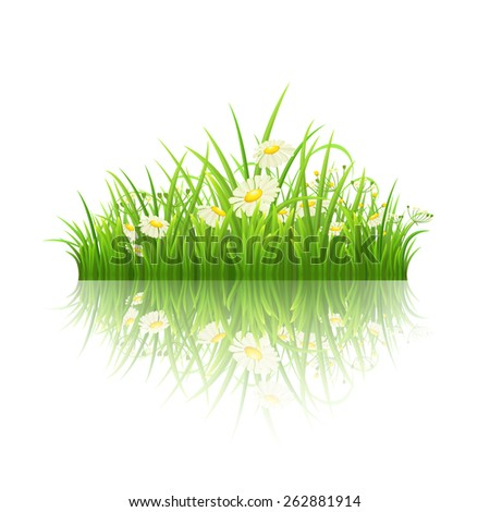 Green grass and daisies with reflection on white, vector illustration - stock vector