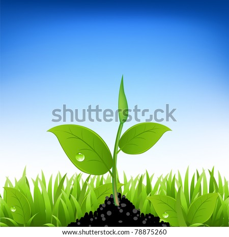 Green Grass And Young Plant, Vector Illustration - stock vector