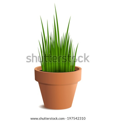 Green grass in a pot isolated on white background. Vector illustration - stock vector
