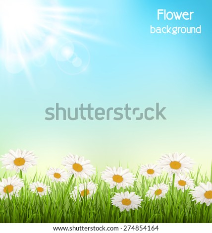 Green grass lawn with white chamomiles and sunlight on sky background - stock vector