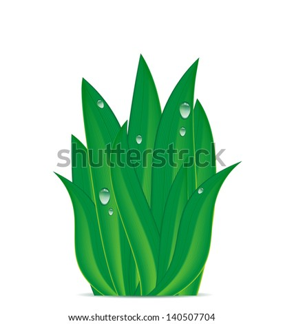 green grass with dew drops on a white background - stock vector