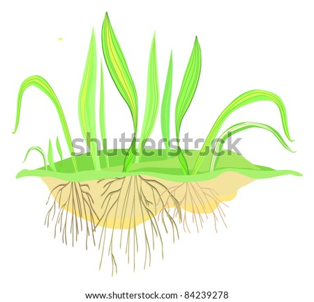Green grass with roots, vector - stock vector