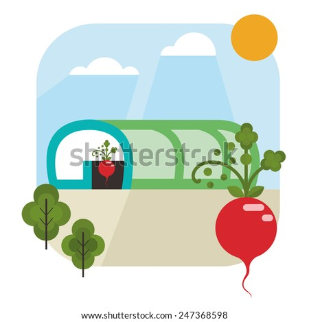 Green House with radish. Flat Design  - stock vector