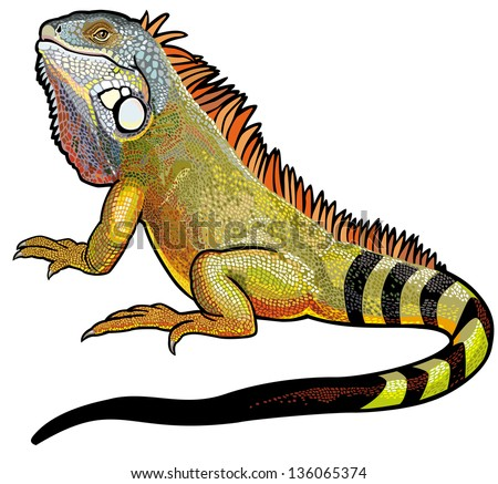green iguana lizard side view picture isolated on white background - stock vector