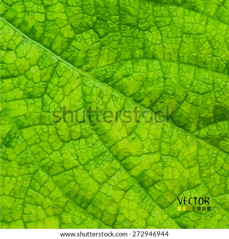 green leaf background. Vector - stock vector