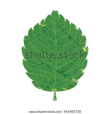 Green leaf, Vector illustration Eps 10 - stock vector