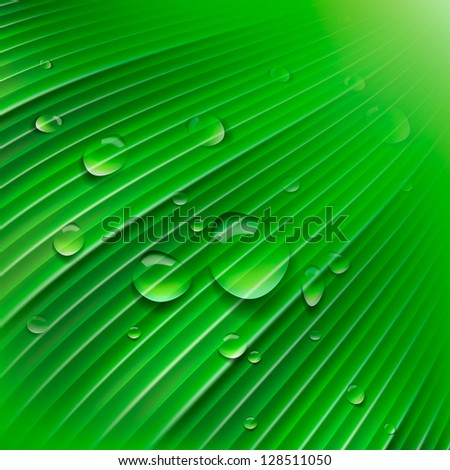 Green leaf with drops of water - stock vector