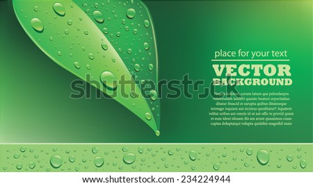 Green leaf with water droplets - stock vector