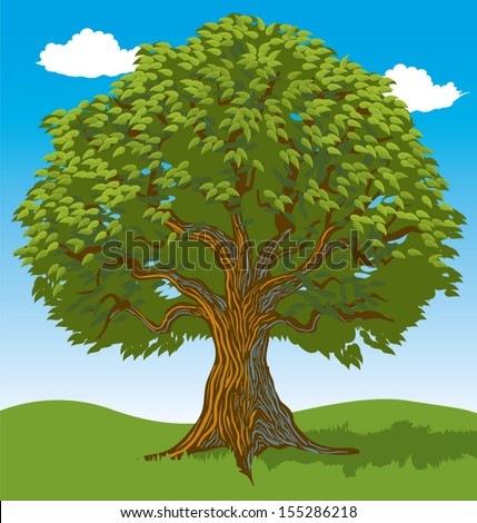 Green leafy tree in open field - stock vector