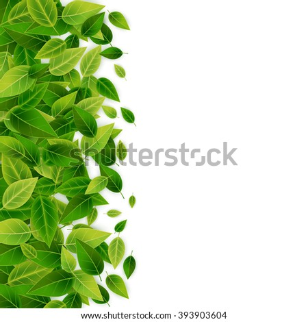 Green leaves background, vector illustration - stock vector