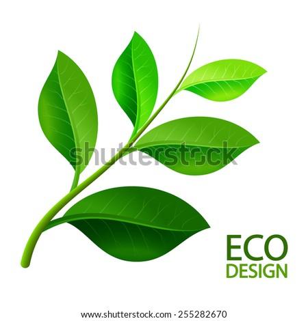 Green leaves branch.  Vector illustration. - stock vector