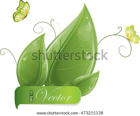 Green leaves design with butterfly isolated on white, vector illustration, eps-10