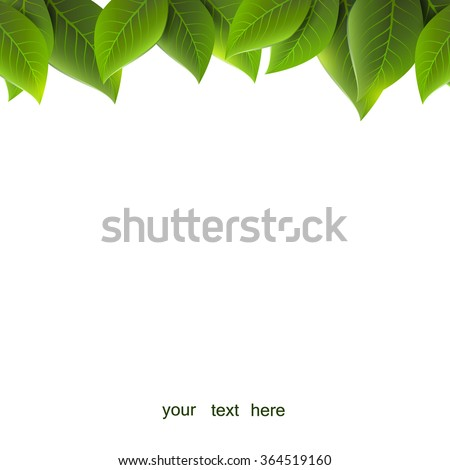 green leaves on a white background, vector - stock vector