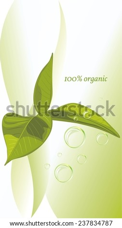 Green leaves on the abstract background. Vector