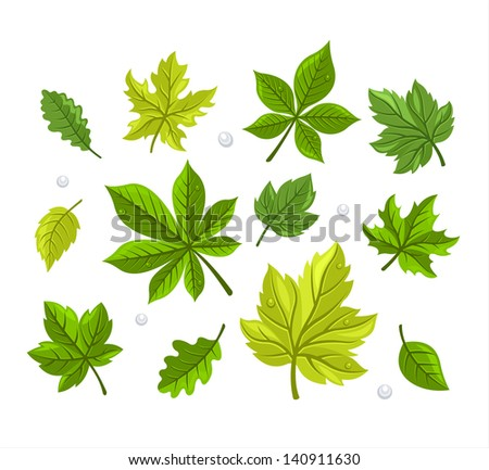 Green Leaves Set - stock vector