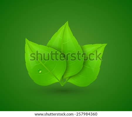 Green leaves with drops of water. Eco Concept. Vector illustration. - stock vector