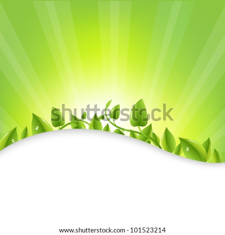 Green Leaves With Sunburst  And Rays, Vector Illustration - stock vector
