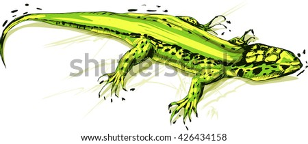 Green lizard, vector illustration on a white background. Stylized grunge