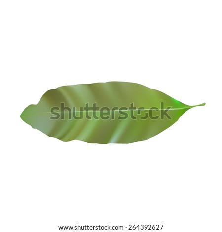 Green mango leaf
