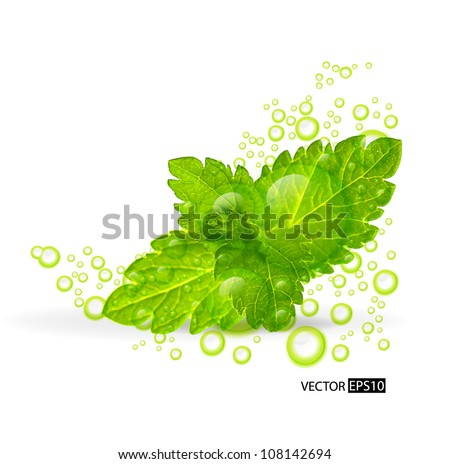 Green mint leaves with water drops isolated on a white background.Vector illustration. - stock vector